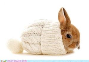 bundledrabbit