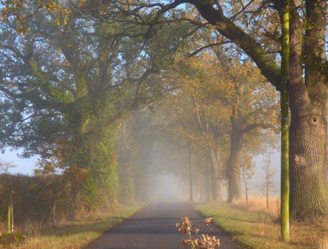 foggy morning 009