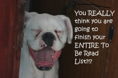 laughing white boxer