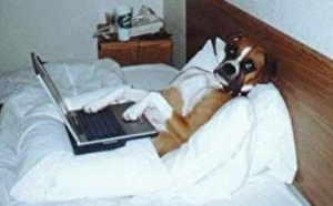 stay-in-bed-lady-dog-laptop